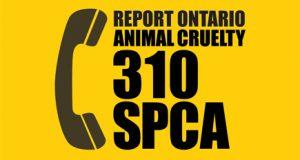 310 SPCA - rep[ort animal cruelty in Toronto