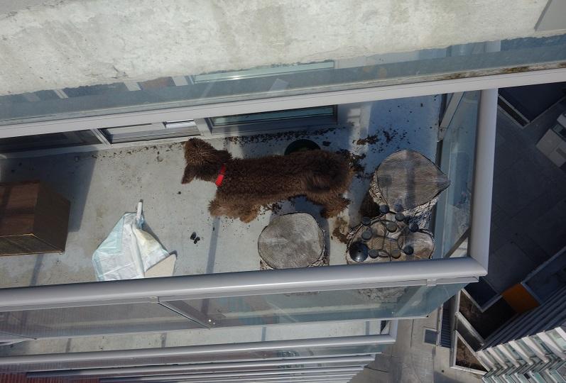 dog barking on balcony day